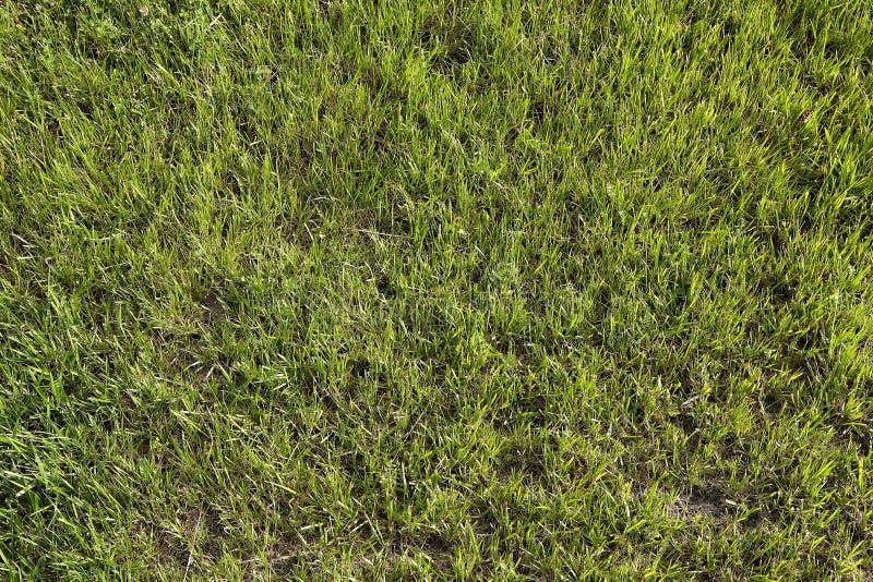 Зеленая трава на футбольном поле стоковые фотографии rf