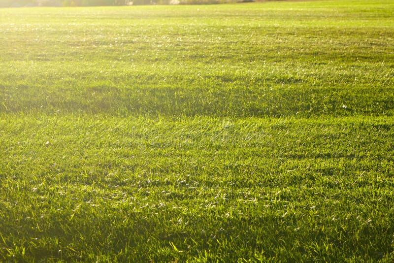 Зеленая трава на футбольном поле стоковое изображение rf