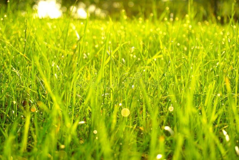 Зеленая трава, падения воды и капля росы в утре стоковые фото