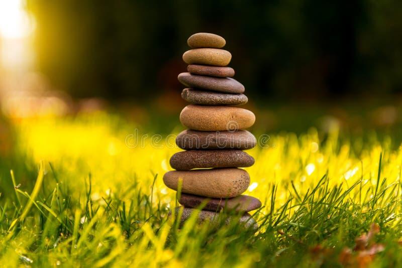 Зеленая трава с камнями и маргаритки стоковые фотографии rf