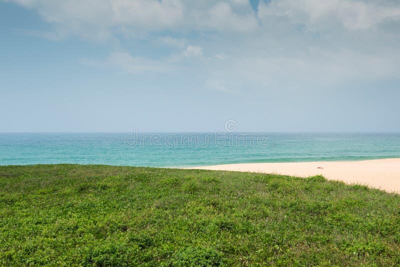 Зеленая трава с пляжем стоковое изображение rf