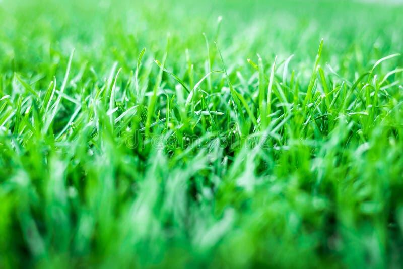 Зеленая трава Текстура естественной предпосылки стоковая фотография rf