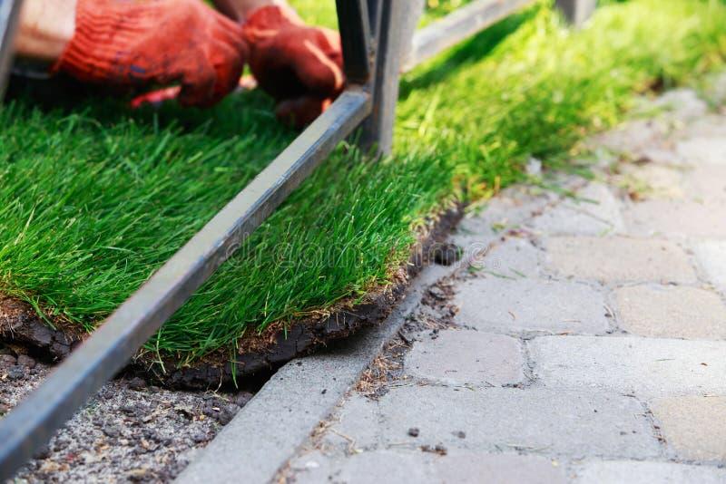 Зеленая трава лужайки в кренах стоковая фотография