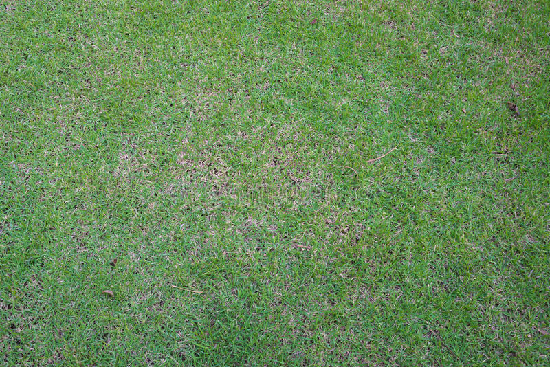 Зеленая трава стоковая фотография
