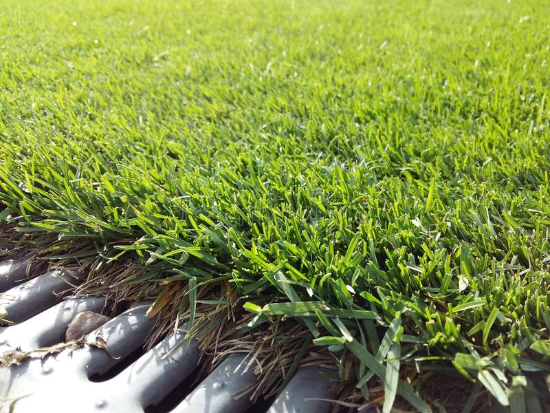 Зеленая трава стоковое фото rf