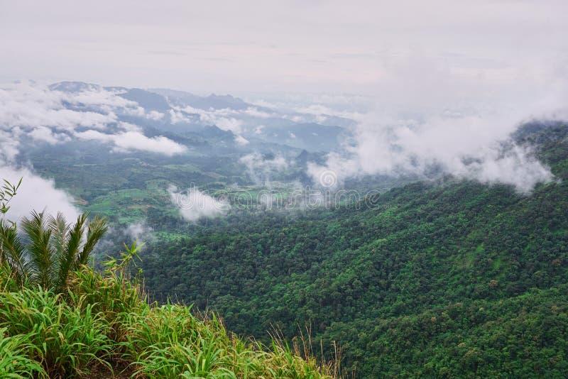 Зеленая трава na górze горы Точка зрения на пике горы в пасмурном дне стоковое фото rf