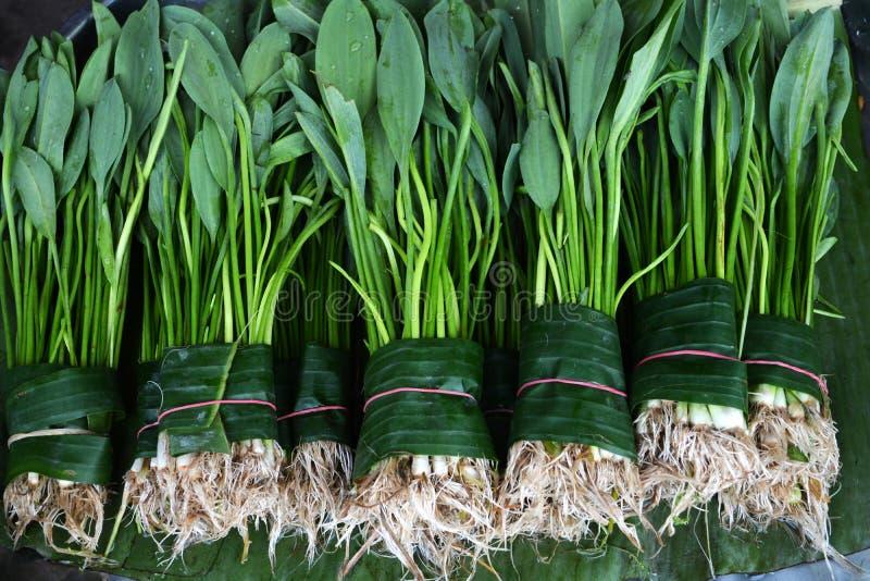 Зеленеет овощ листьев стоковые фото