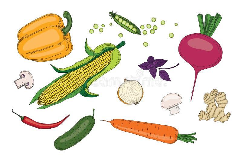 Зеленого цвета весны овощей и трав собрание вектора свежего органическое стоковое фото rf