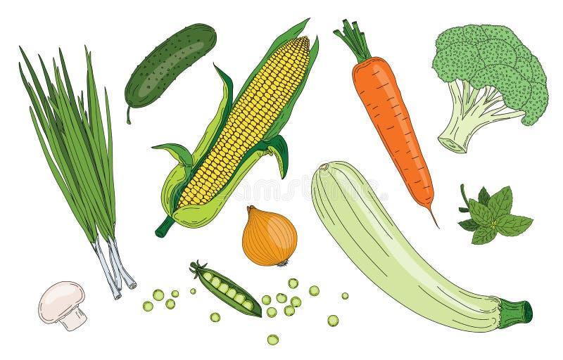 Зеленого цвета весны овощей и трав собрание вектора свежего органическое стоковые изображения