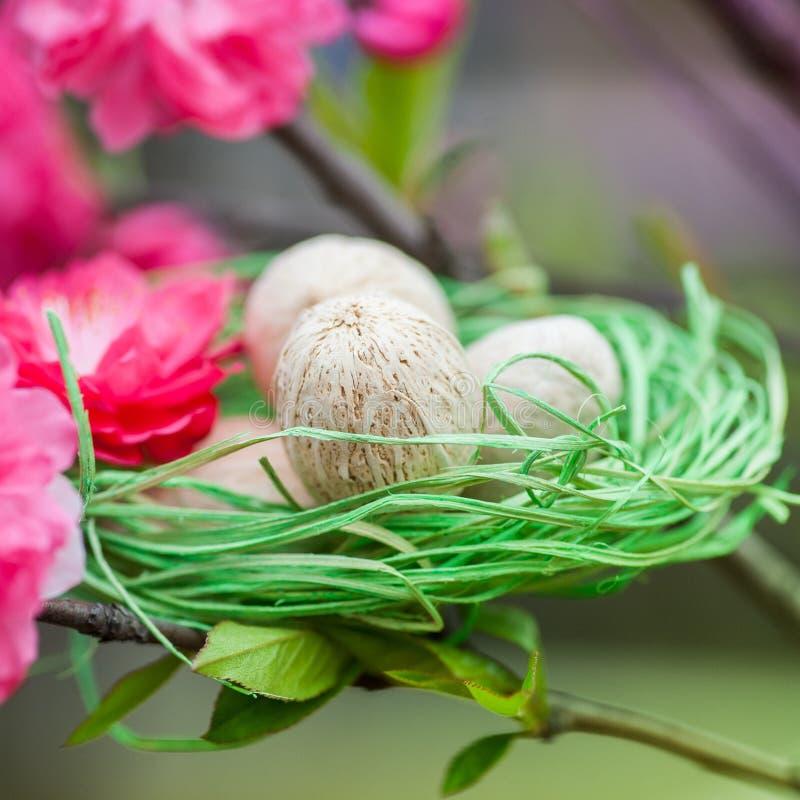Зеленое гнездо с яичками на вишневом дереве стоковая фотография
