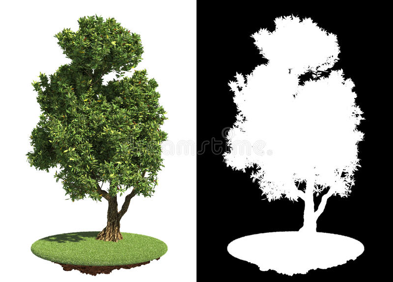 Зеленое дерево изолированное на белой предпосылке. бесплатная иллюстрация