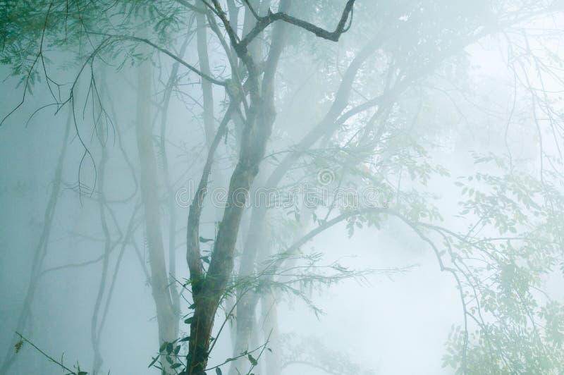 Download Зеленое дерево с туманом на горячем источнике Стоковое Фото - изображение насчитывающей напольно, яркое: 40585380