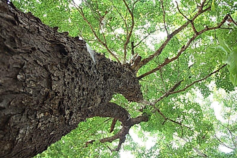 Зеленое искусство шипучки Азии природы дерева стоковое фото rf