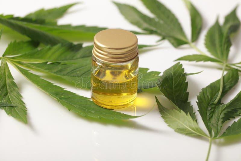 Зеленое масло лист конопли на белой предпосылке стоковое фото