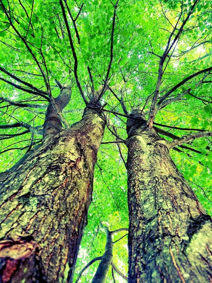 зеленое небо стоковые изображения
