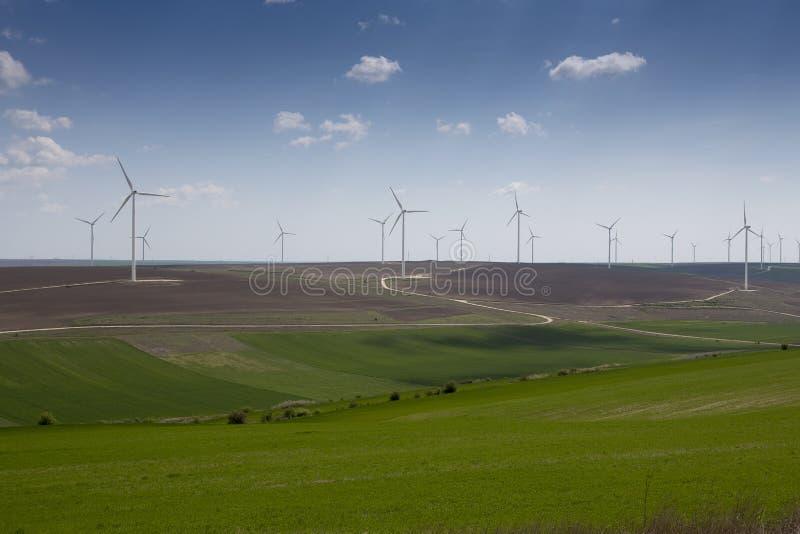 Зеленое поле ветрянок стоковое изображение