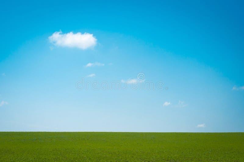 Зеленое поле и белые облака на голубом небе выше стоковое изображение rf