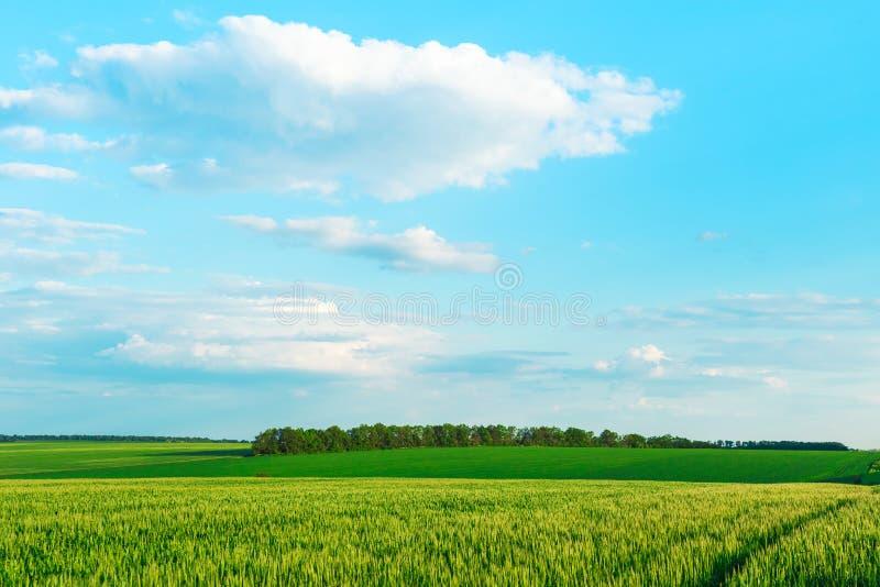 Зеленое поле и голубое небо с светлыми облаками стоковые изображения