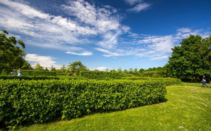 Зеленое поле и голубое небо с светлыми облаками стоковое изображение rf