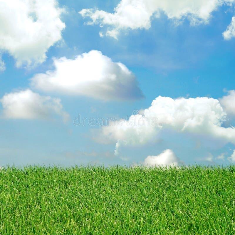 Зеленое поле и голубое небо с светлыми облаками стоковое фото