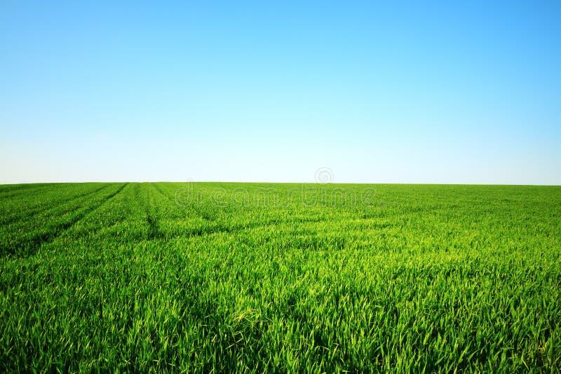 Зеленое поле и ясное небо стоковая фотография