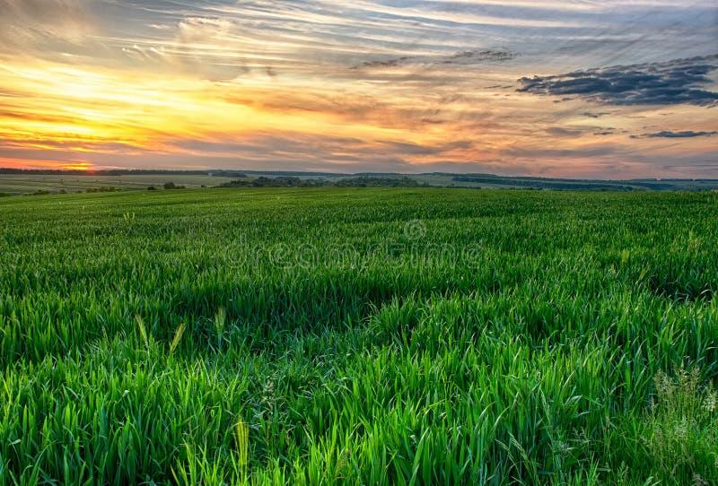 Зеленое поле на suset стоковое фото