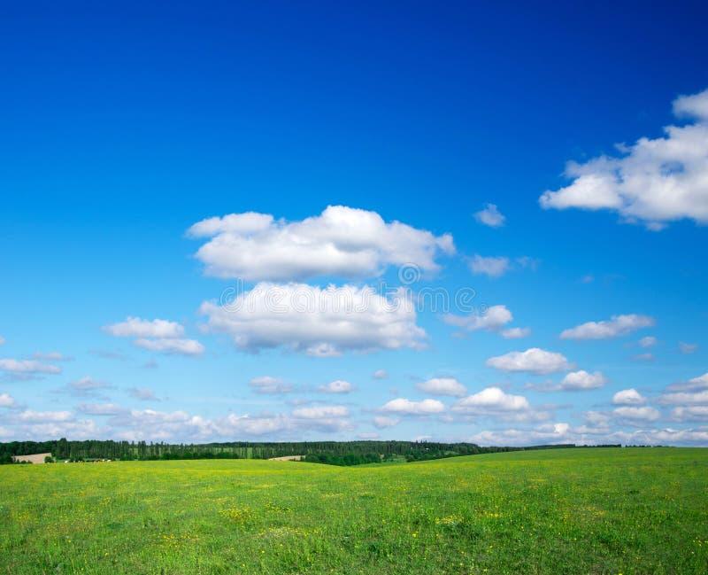 Download Зеленое поле стоковое изображение. изображение насчитывающей естественно - 33729207