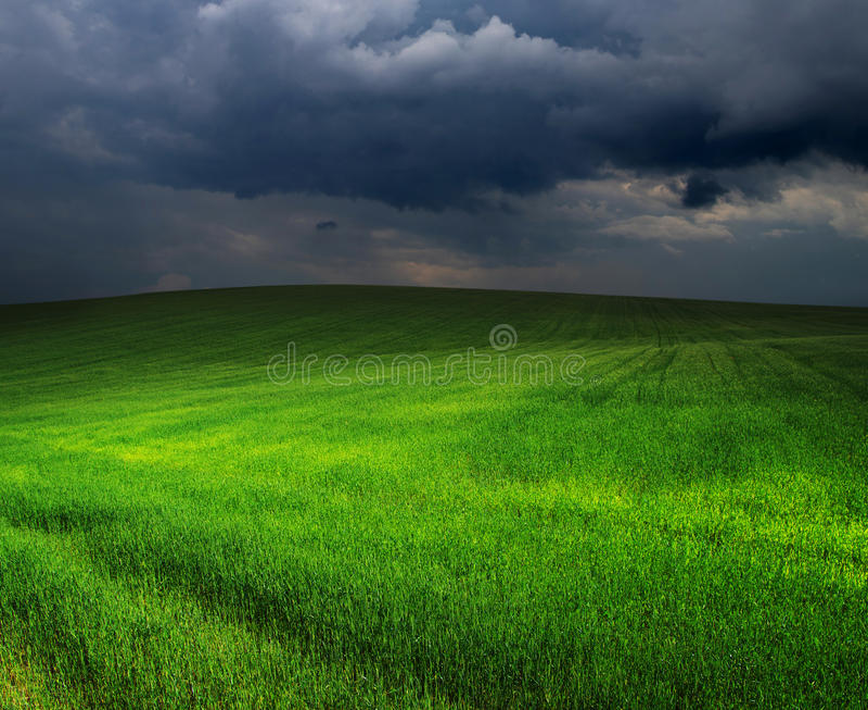 Download Зеленое поле стоковое изображение. изображение насчитывающей пасмурно - 33729319