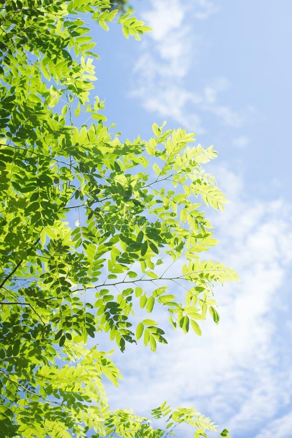 Зеленое разрешение с предпосылкой голубого неба и облака стоковые фотографии rf
