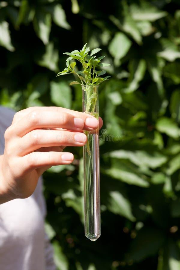 Зеленое растение в пробирке стоковое изображение