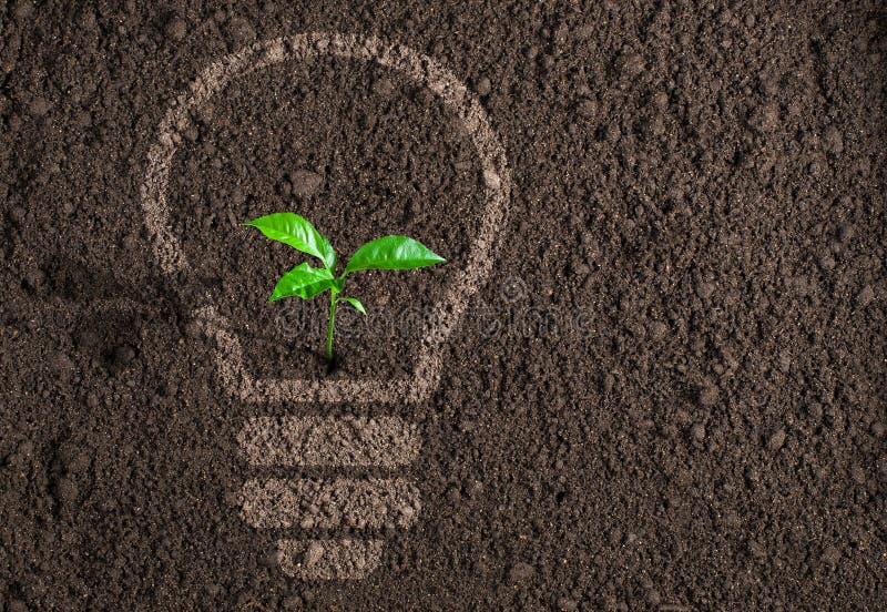 Зеленое растение в силуэте электрической лампочки на почве стоковое изображение rf