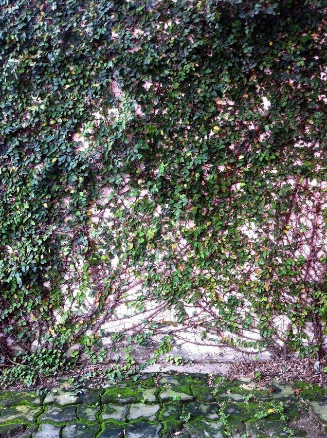 Зеленое растение и стена стоковые фото