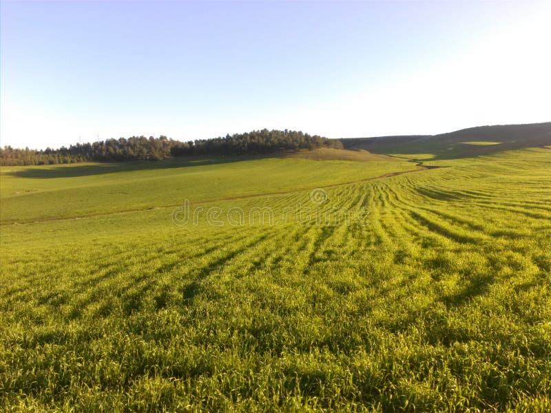 Зеленое солнце сельскохозяйственного угодья стоковое изображение rf