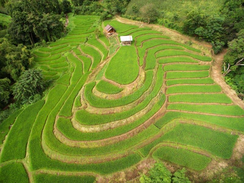 Зеленое террасное поле риса в Chiangmai стоковые фотографии rf
