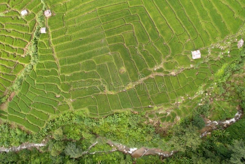 Зеленое террасное поле риса в Chiangmai стоковые изображения rf