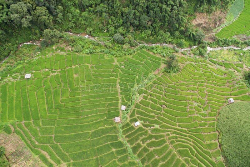 Зеленое террасное поле риса в Chiangmai стоковое изображение