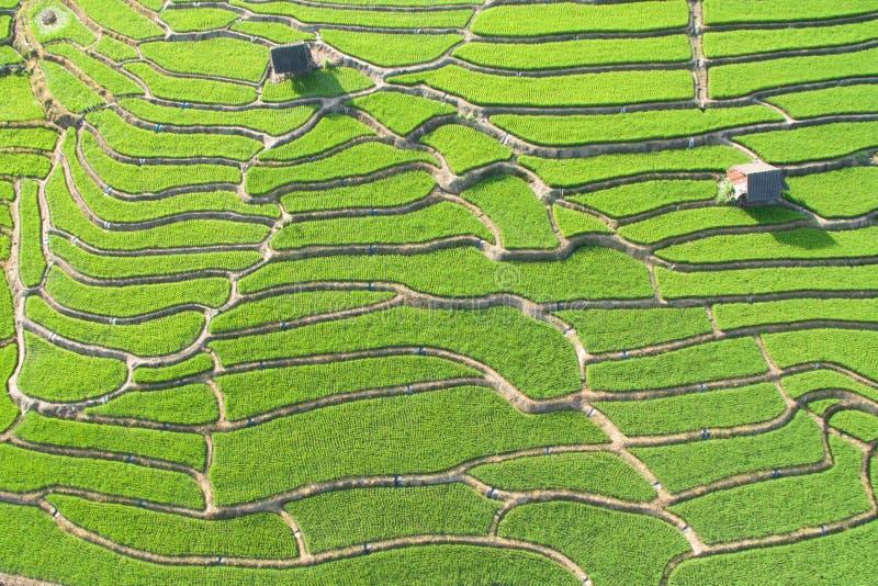 Зеленое террасное поле риса в Chiangmai стоковое изображение rf