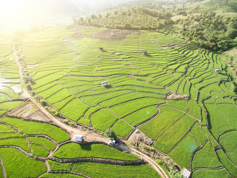 Зеленое террасное поле риса в Chiangmai стоковое фото rf