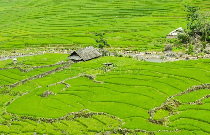 Зеленое террасное поле риса в Sapa, Lao Cai, северо-западном Вьетнаме стоковая фотография rf