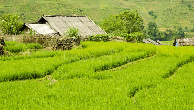 Зеленое террасное поле риса в Sapa, Lao Cai, северо-западном Вьетнаме стоковые изображения rf