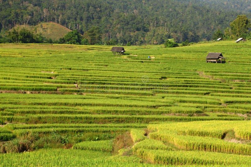 Зеленое Terraced поле риса в Chiangmai, Таиланде стоковое изображение