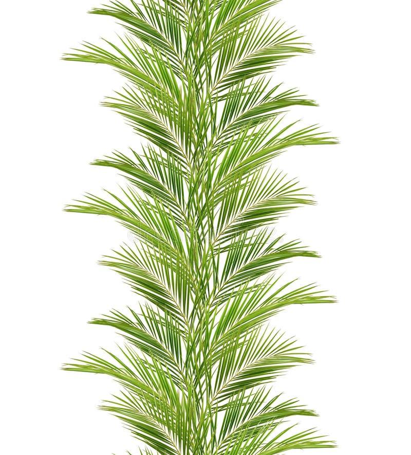 Зеленые ветви ладони в линии расположении стоковое фото rf