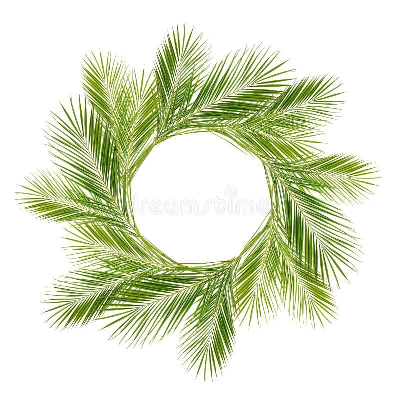 Зеленые ветви ладони в круглой рамке стоковое изображение