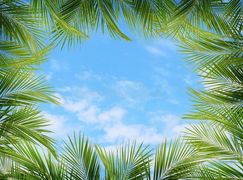 Зеленые ветви ладони и голубое небо стоковые изображения