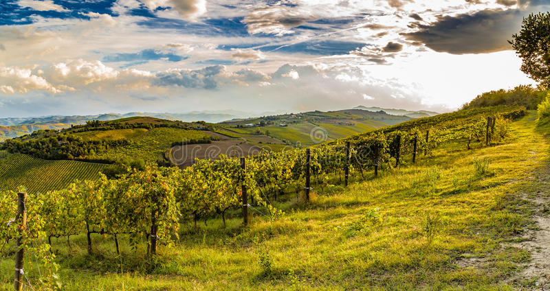 зеленые виноградники итальянских холмов стоковые фотографии rf