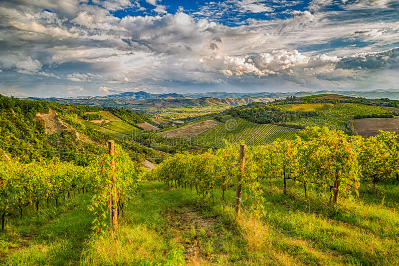 зеленые виноградники итальянских холмов стоковая фотография