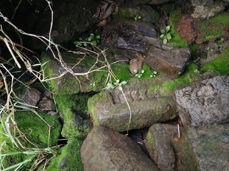 Зеленые водоросли на утесе стоковые изображения rf