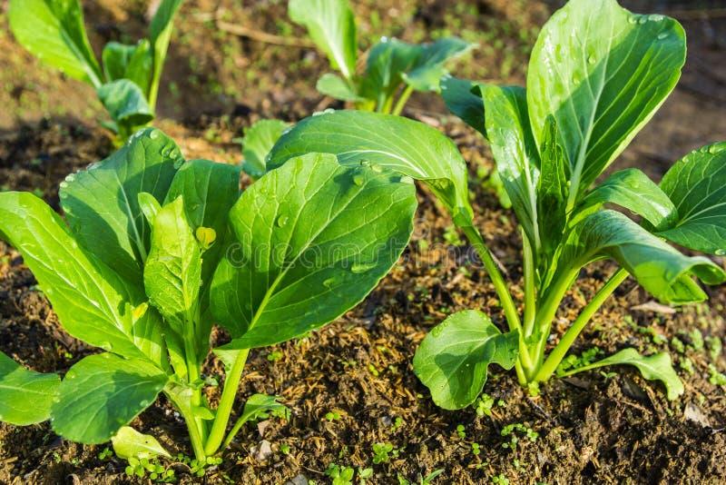 зеленые густолиственные овощи стоковые фото