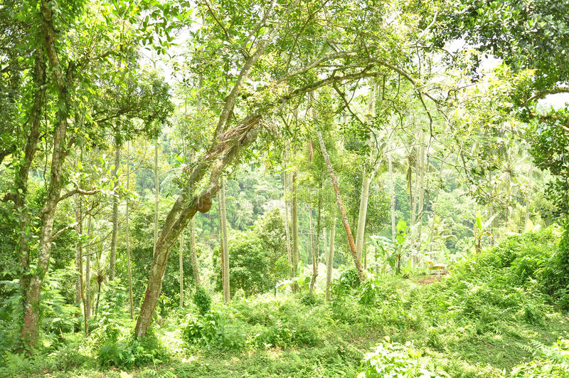 Зеленые леса на Ubud стоковые фото