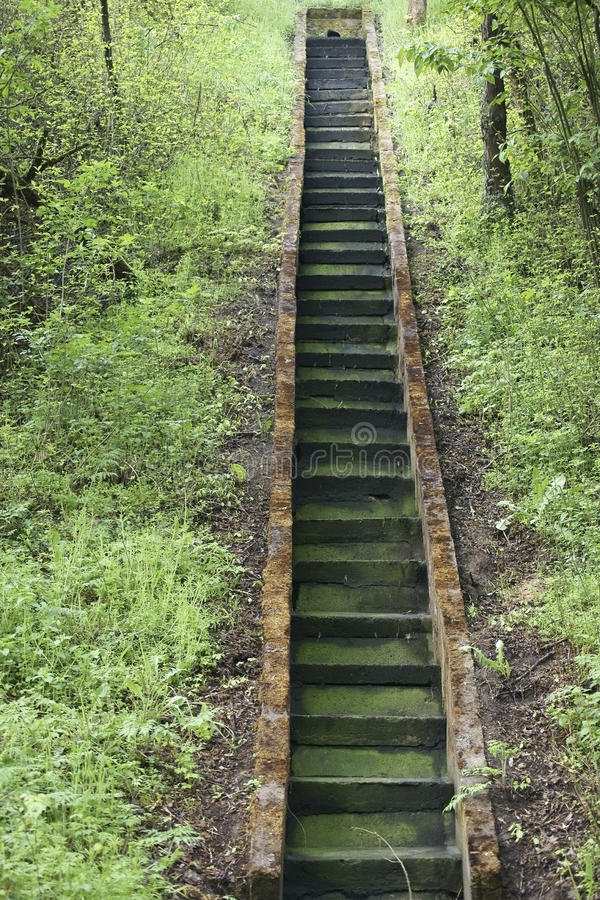 Зеленые лестницы стоковые изображения rf